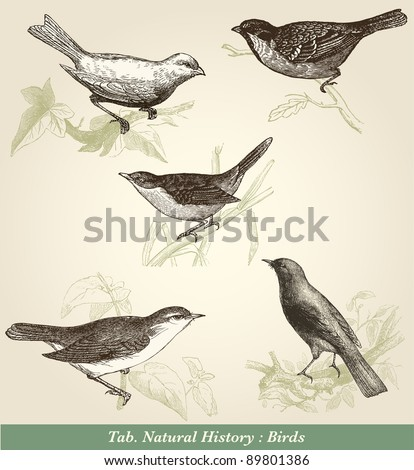 birds   vintage engraved...