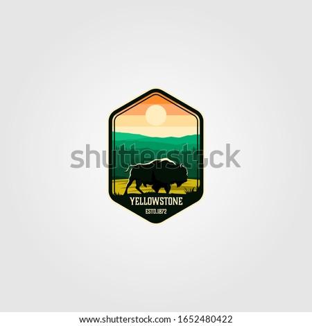 bison on yellowstone national
