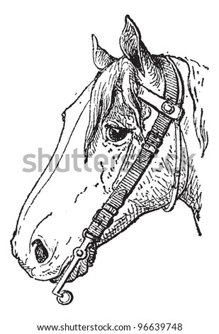 Bit, a type of horse tack, vintage engraved illustration. Dictionary of words and things - Larive and Fleury - 1895.