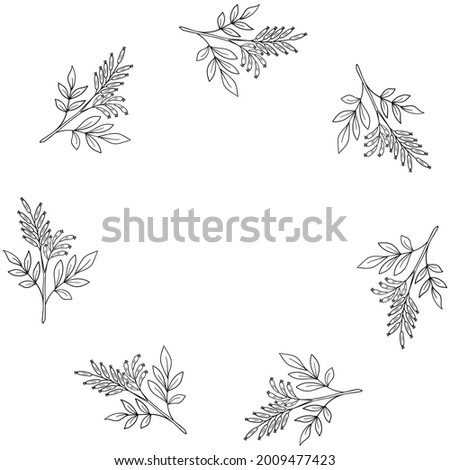 Bitter-wood in sketch style, medicinal plant. Quassia amara, or amargo, hand drawn doodle illustration. Bitter-ash, hombre grande, frame or border. Foto stock ©