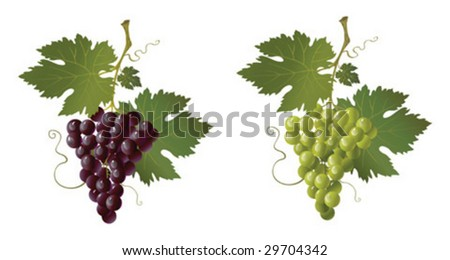 black and green grape