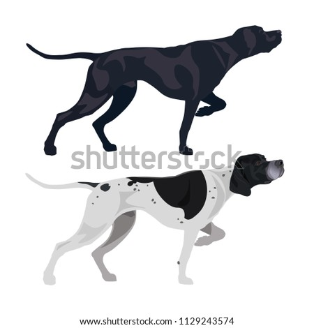 Black and spotted english pointers. Vector illustration isolated on the white background
