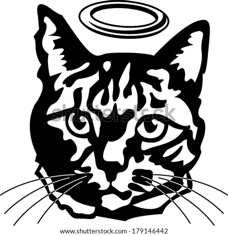 black and white angel tabby cat