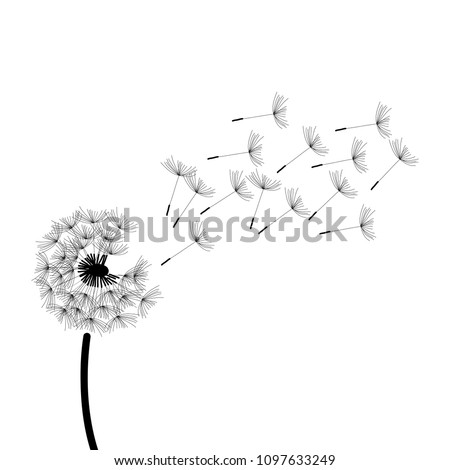 black and white dandelion illustration