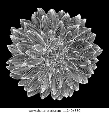 black and white drawing of dahlia flower. Element for your design, engraving style