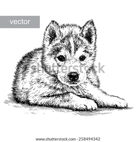 black and white engrave husky
