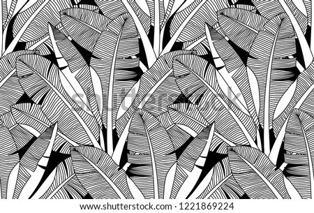 black and white exotic plant