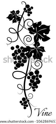 black and white grapevine