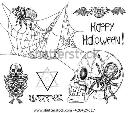 Free Tarantula Vector - Download Free Vector Art, Stock Graphics ...