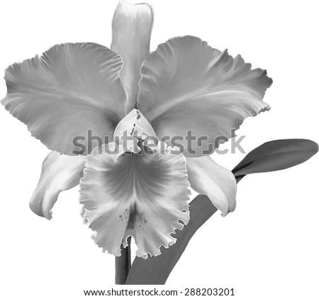 black and white illustration of