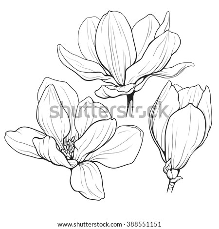 Vector Images Illustrations And Cliparts Black And White Line