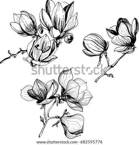 black and white line illustration of magnolia flowers on a white background #682595776