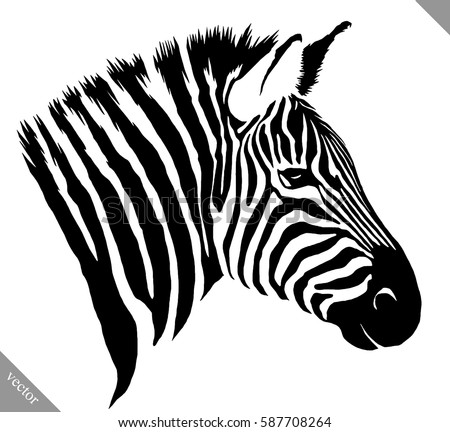 Zebra head download free vector art stock graphics images black and white linear paint draw zebra vector illustration pronofoot35fo Gallery