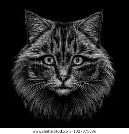 black and white  monochrome