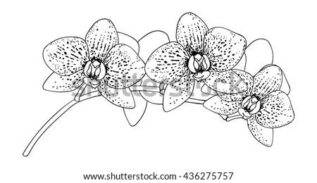 black and white of orchid