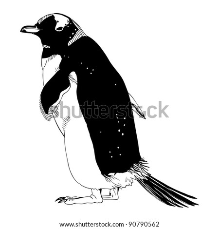 Black and white penguin is standing alone.