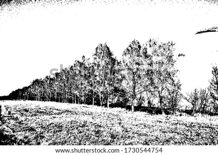 black and white photo of birch
