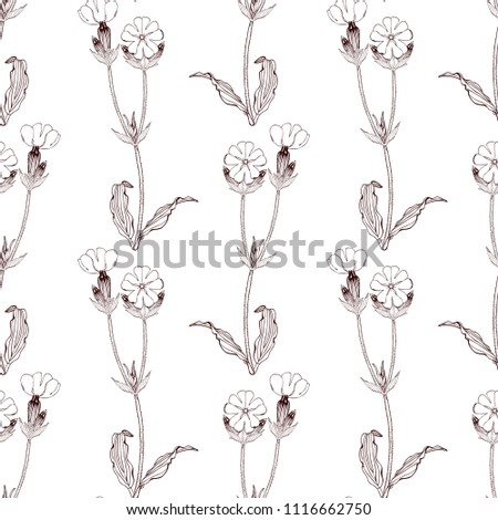 Black and white Seamless pattern with white campion flowers on white background. stock Vector illustration. #1116662750