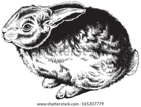 Black and white sketch of a cute rabbit. Vector Illustration.