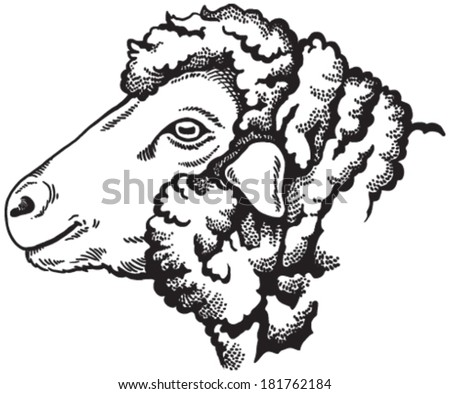 Black And White Sketch Of A Sheeps Face Vector Portrait Pet Head Cut
