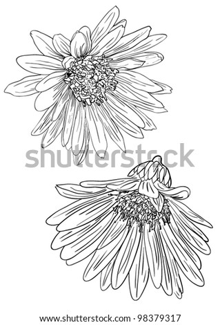 black and white sketches of daisies