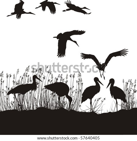 black and white vector illustration of storks on the lakeside