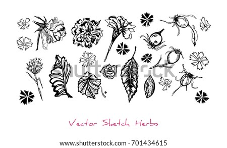 Black and white vector set of sketches of herbs (different parts of plants: flowers, berries, leaves), initially hand drawn in Chinese ink, elements for floral design, isolated on white
