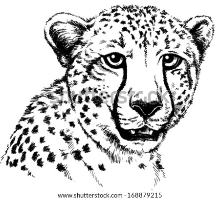 Cheetah Head - Download Free Vector Art, Stock Graphics & Images
