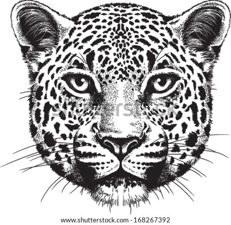 Black and white vector sketch of a leopard's face