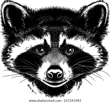 Raccoon Artist Free Vector / 4Vector Raccoon Face Clip Art Black And White