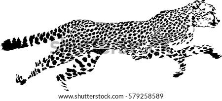 Black and white vector sketch of running Cheetah (Acinonyx jubatus)