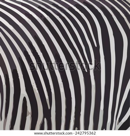 black and white zebra stripes