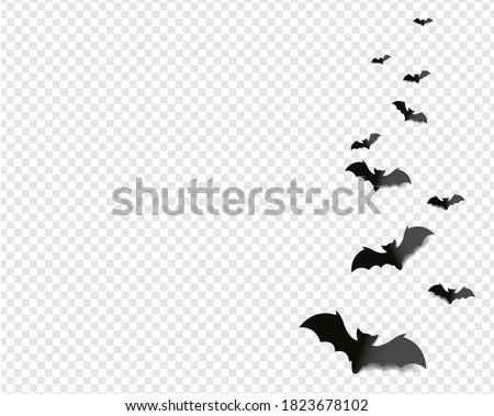 black bats isolated transparent