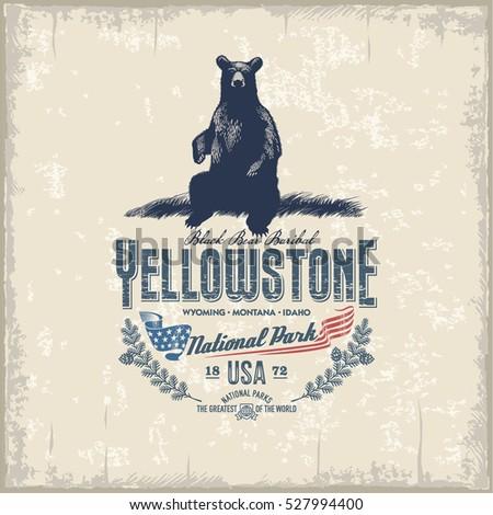Black Bear Baribal, national Park Yellowstone, vintage, illustration, vector