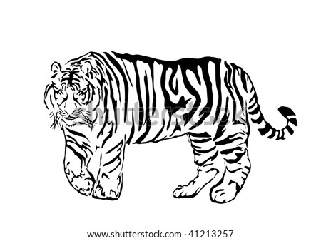 Black bengal tiger isolated on white background, vector illustration