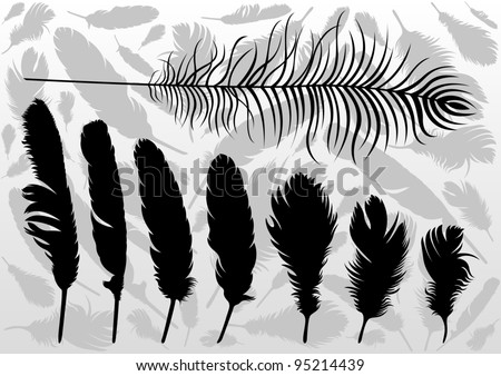Black bird feathers illustration collection background vector