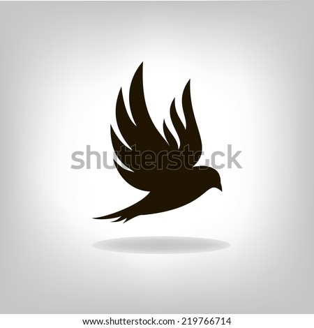 black bird isolated with