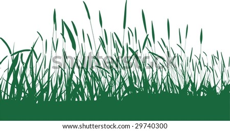 Blade Black And White Black Blade of Grass Isolated