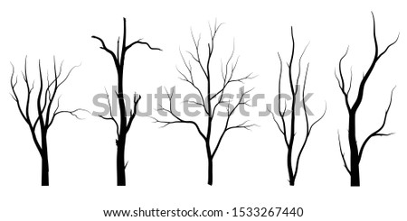 black branch tree or naked