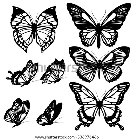 black butterflies isolated on a