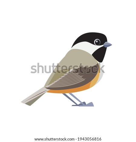 black capped chickadee is a