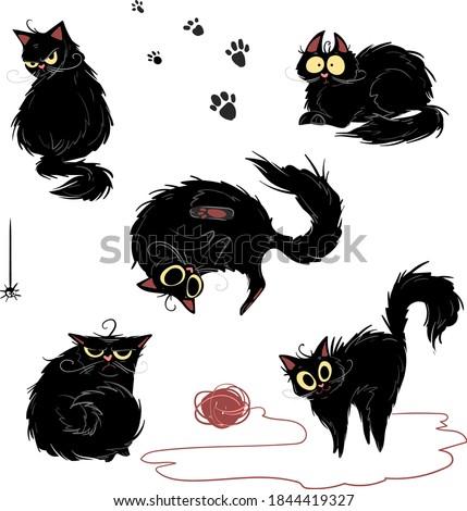 black cat in different poses