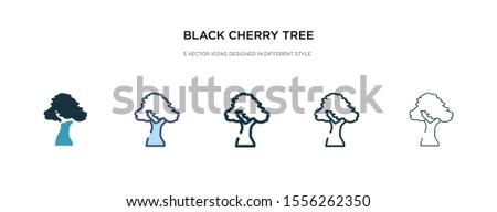 black cherry tree icon in