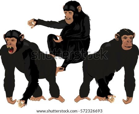 Black chimpanzees in different poses vector set