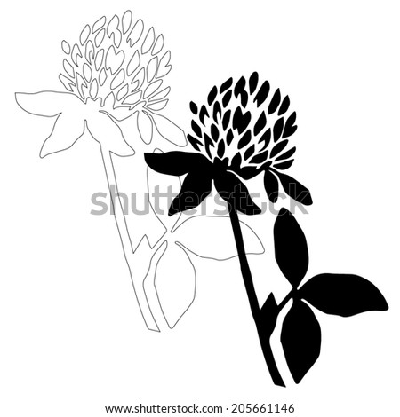 White Clover Drawing Black Clover Flower Isolated