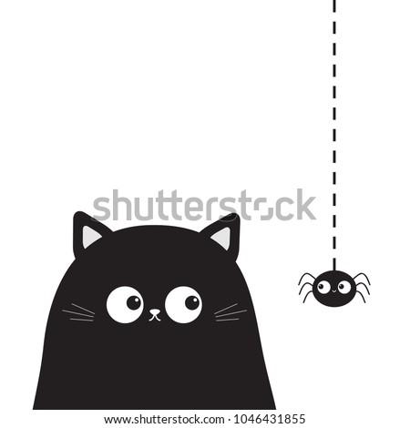 black cute sitting cat kitten