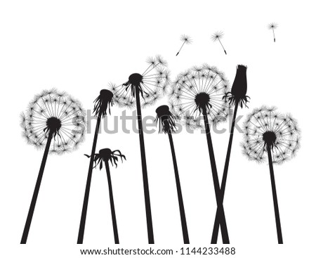 Black dandelions and white background. Vector Illustration.