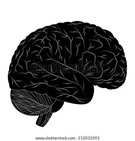 Human Brain Black And White Black Human Brain Isolated on
