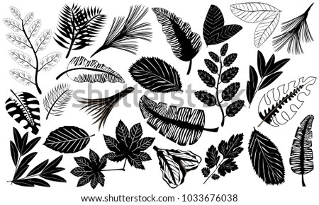 Black icons of leaves of tropical plants. Set of tropical leaves in flat style. Black silhouettes of leaf isolated on a white background. Vector illustration.