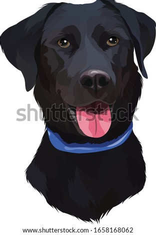 Black Labrador Retriever Dog Vector Illustration